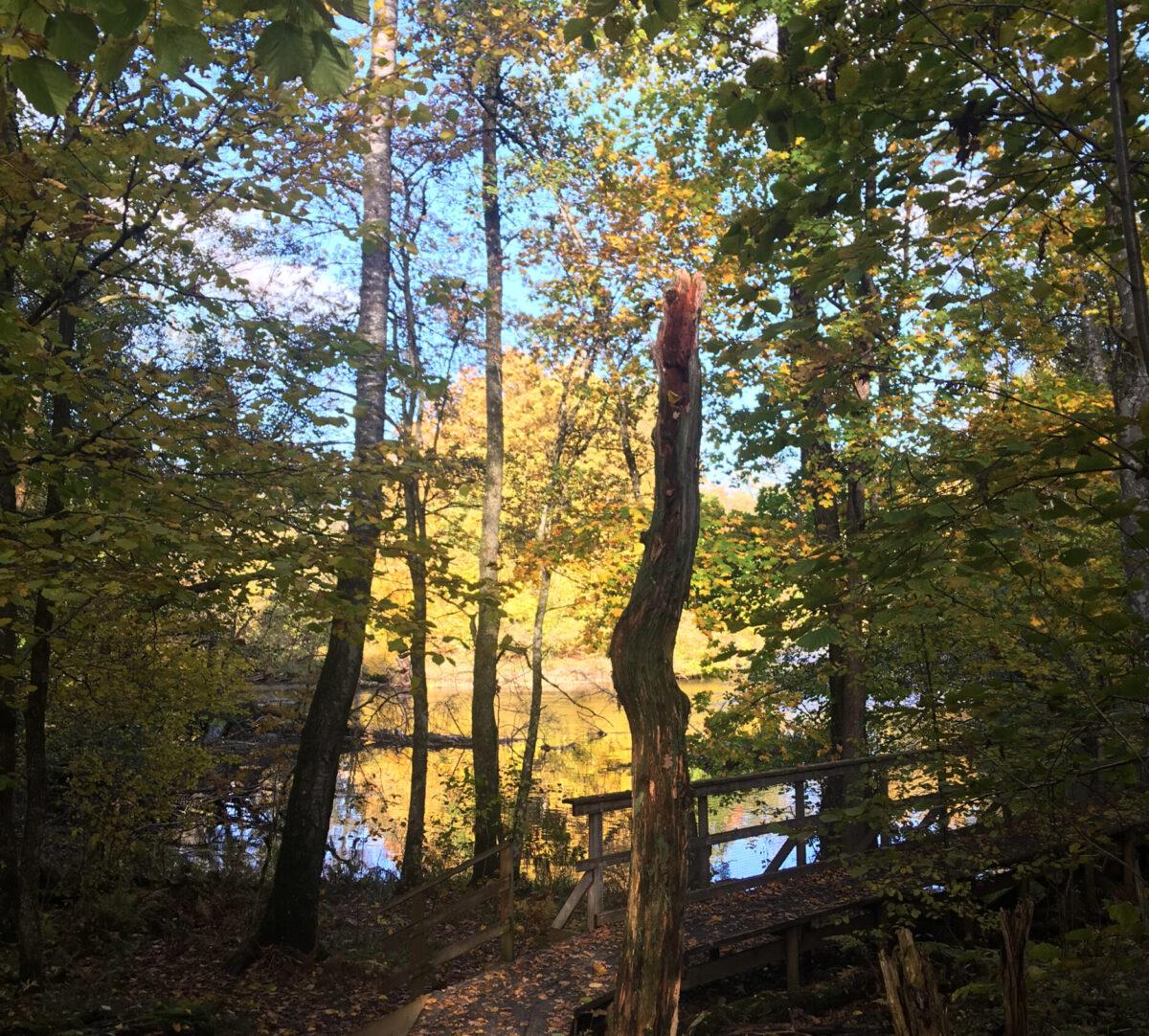 Spång längs med å. Foto.