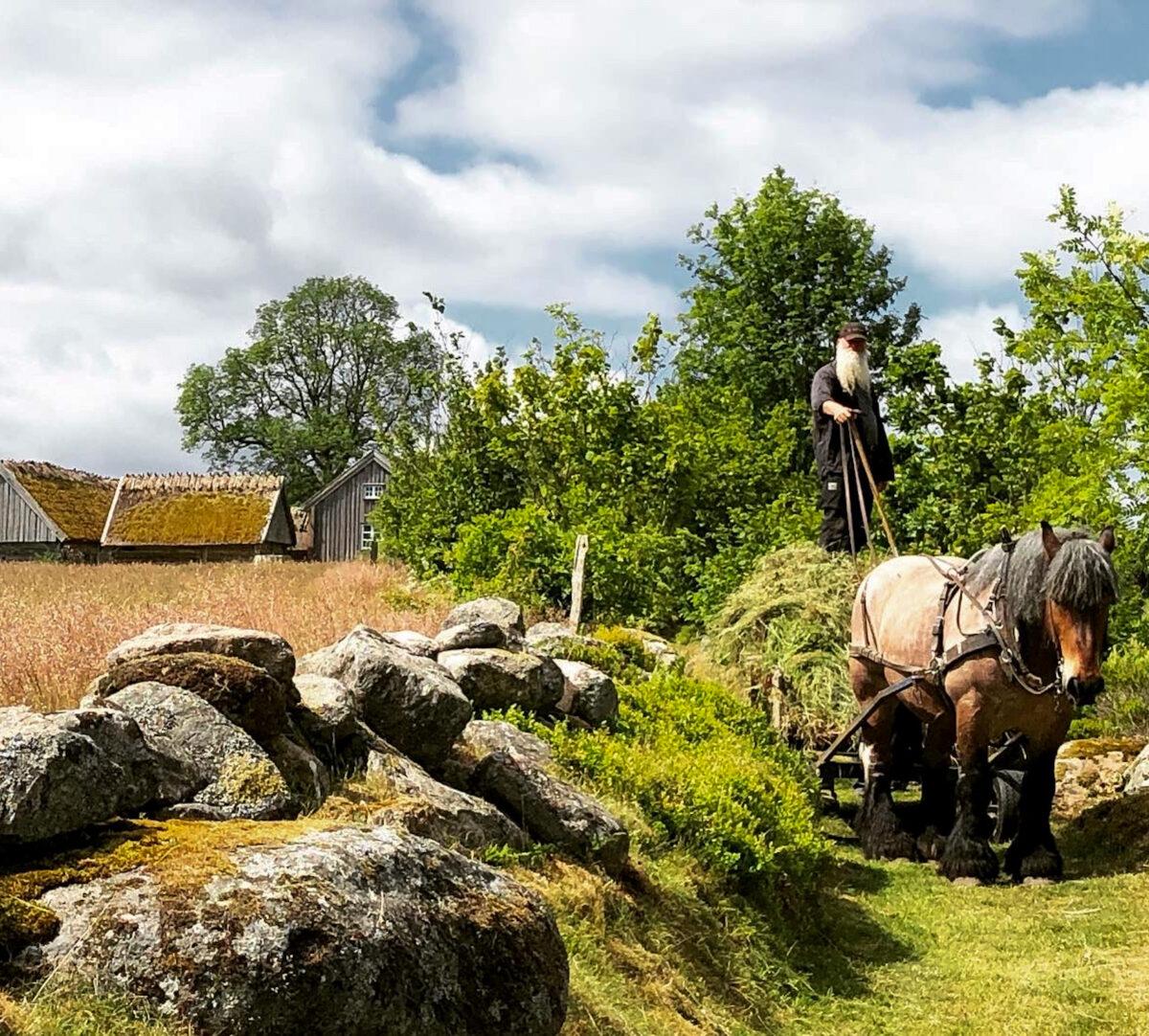En bonde från byn Äskhult står på ett hölass som dras av en arbetshäst. Foto.
