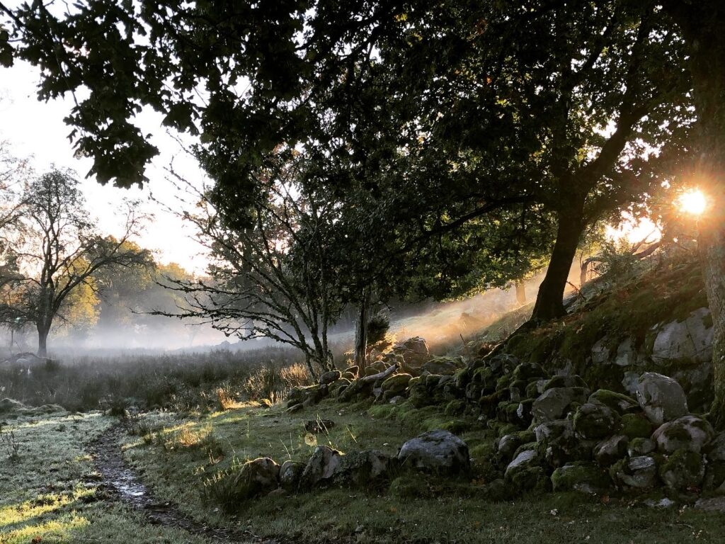 Disig gryning i en hage; vid Äskhult, avgränsad med en stenmur. Foto.
