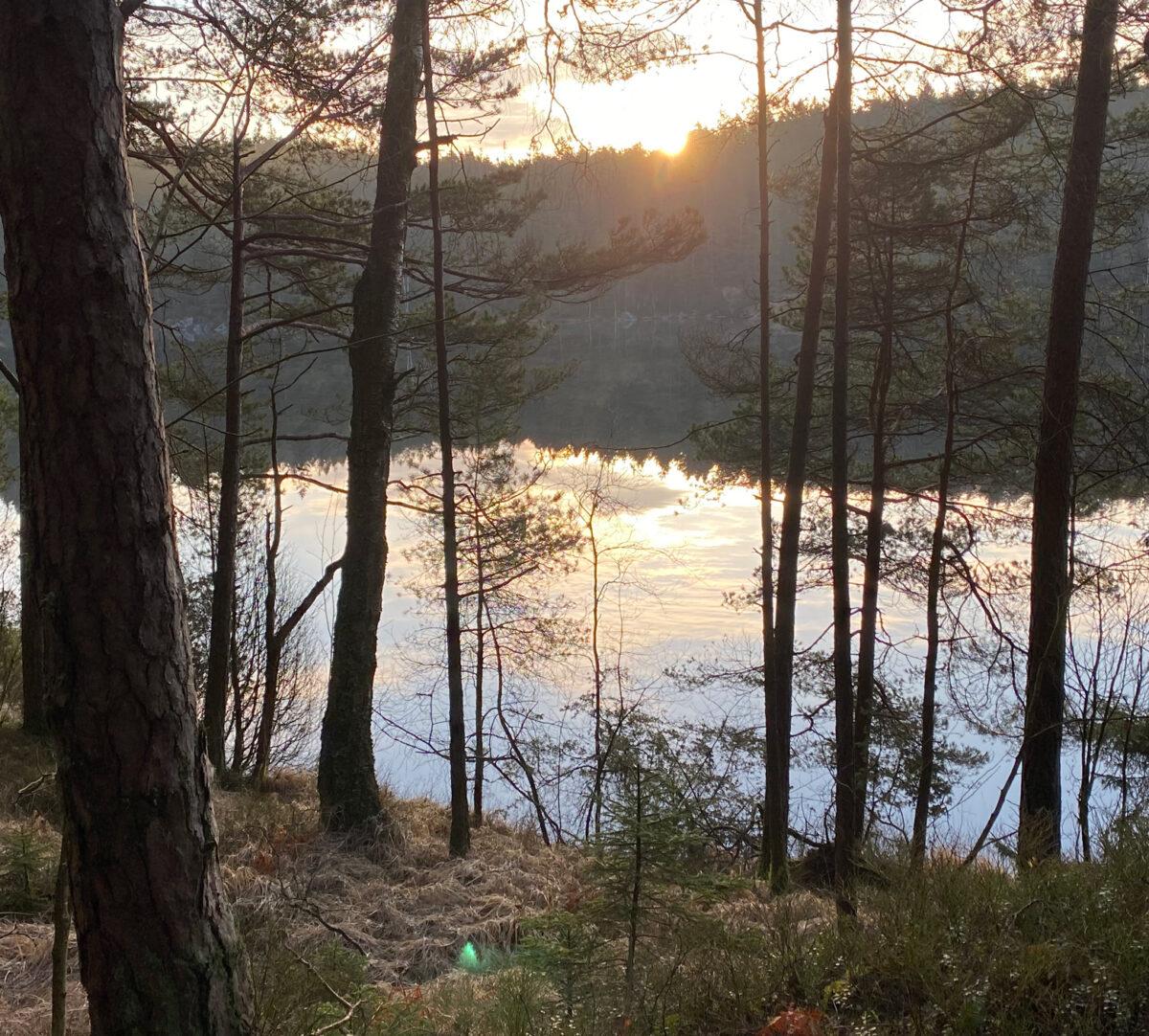 Utsikt över sjö och skog. Foto.