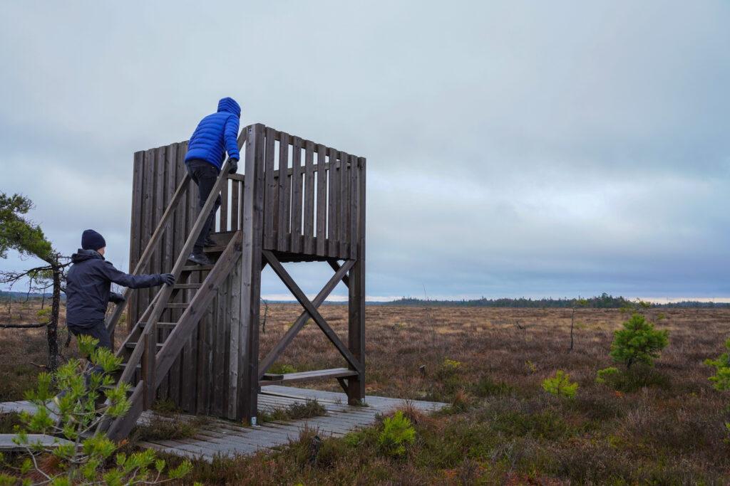 Två personer går uppför en trappa i ett fågeltorn. Foto.