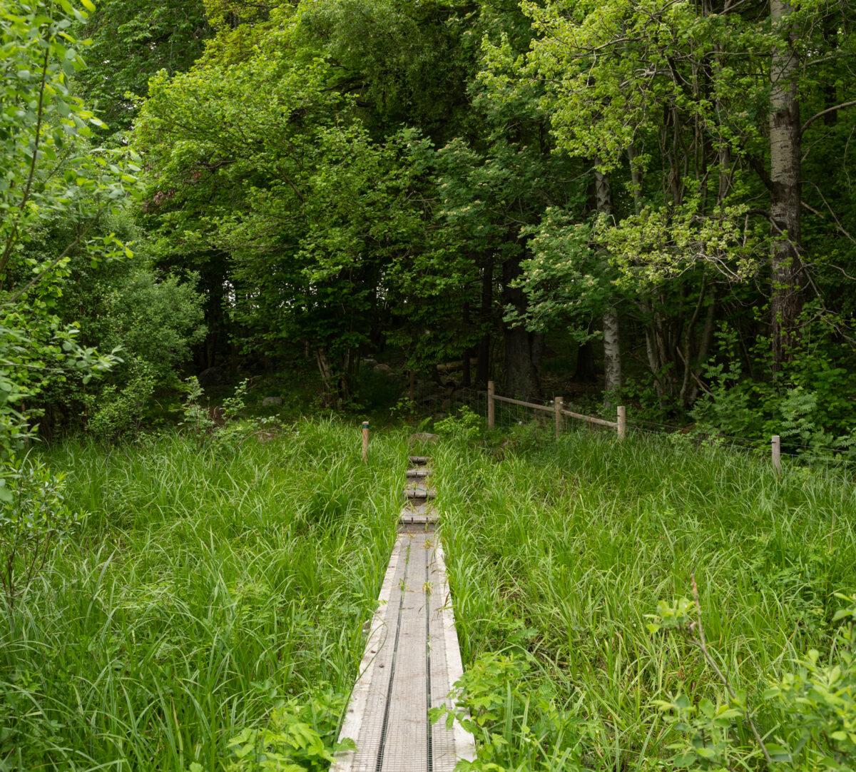 Spång över grönskande marker in mot en skog. Foto.