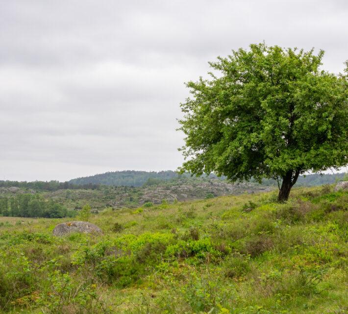 Böljande marker och ett berg längre bort. Foto.