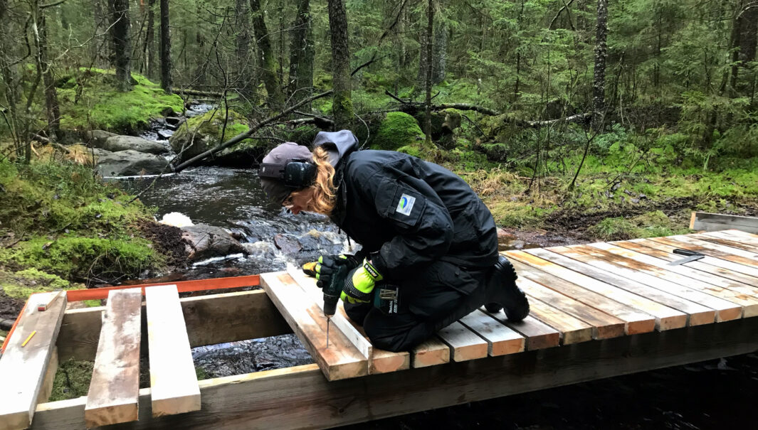 Person bygger en spångbro över en bäck.