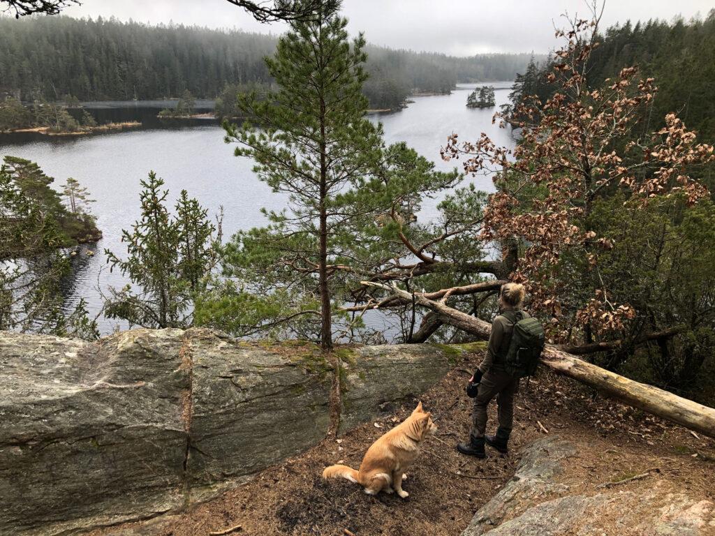 Person med kopplad hund, vid utsikt över sjö och skog. Foto.
