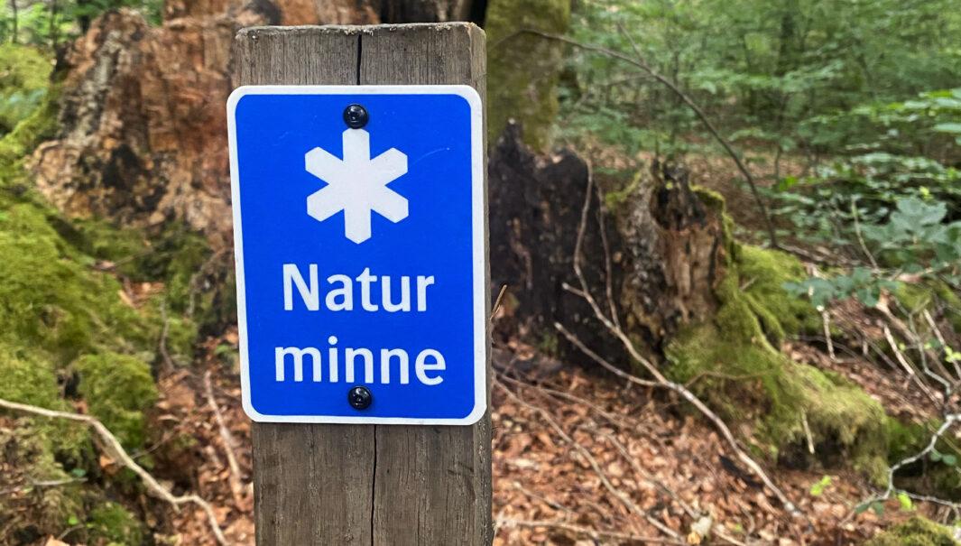 Foto på en markering av ett naturminne; skylt med vit stjärna och texten naturminne.