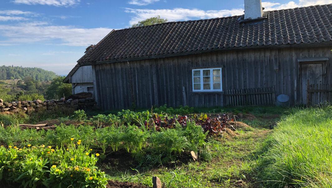 Foto på byggnader och kålgården i kulturreservatet Äskhults by.