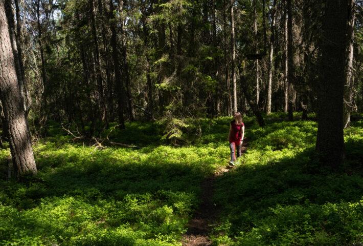 person går på en smal skogstig. Foto.