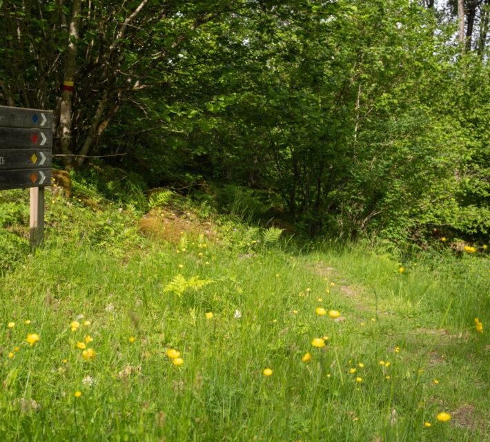 Vägvisre av trä visar vägen in till reservatet. Foto,