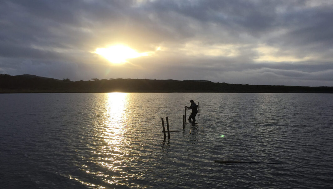 Person står i havet och drar upp stängsel för säsongen. Foto.
