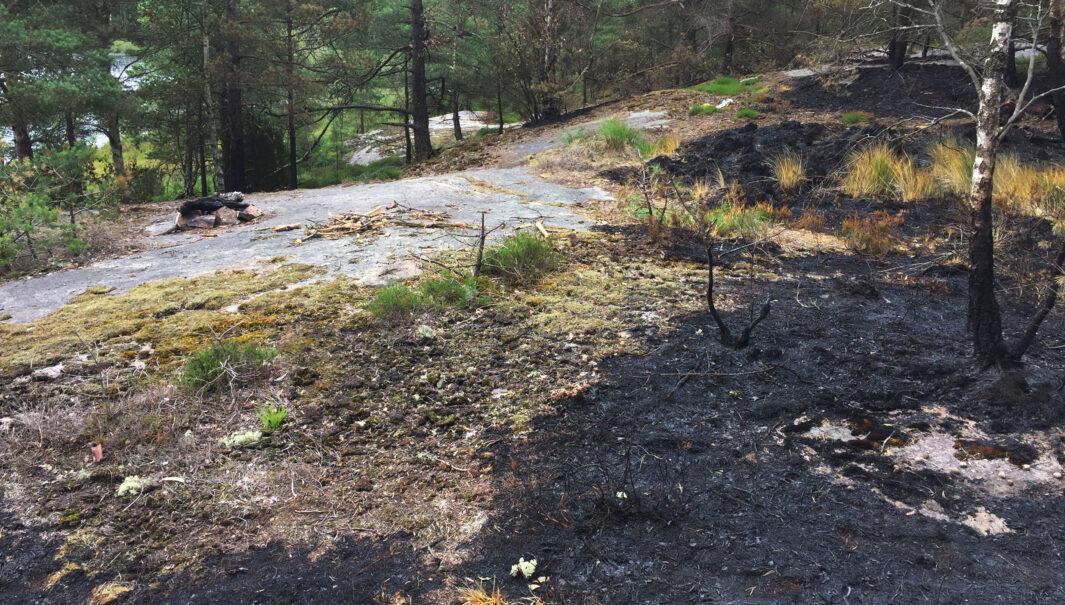 Bränd skog och mark från en brand som spridits från en lägereld. (Foto.