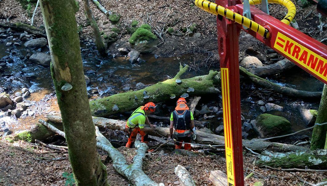 Två personer med utrustning står vid träd som fallit i en å. Foto.