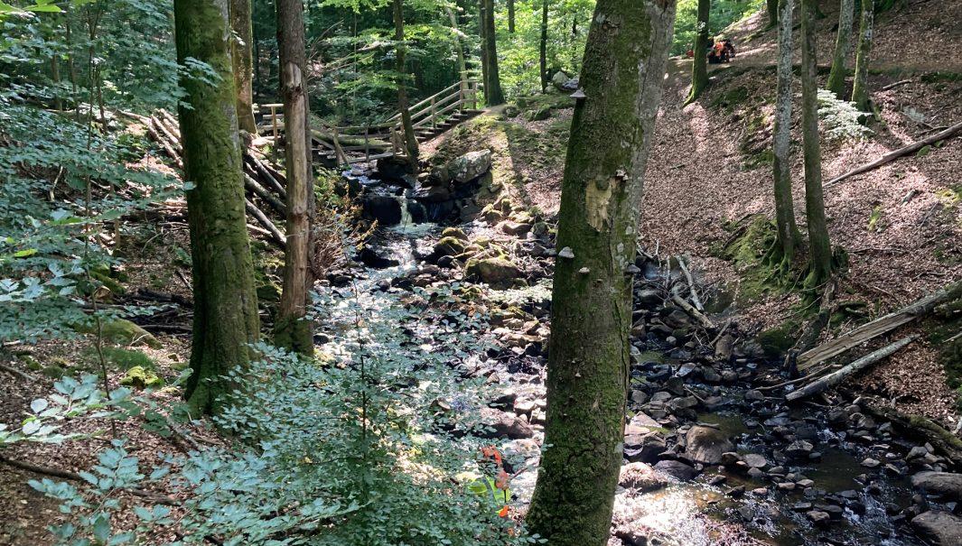 Stenån fri från stora träd i ån. Foto.