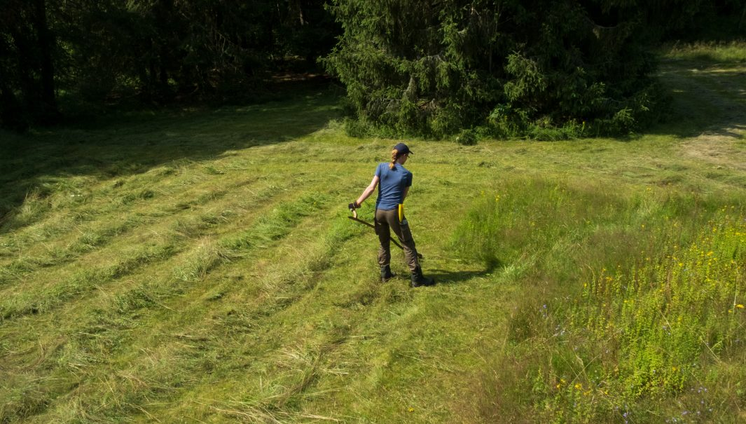 Rader med slaget gräs och en person som slår en äng med lie. Foto.