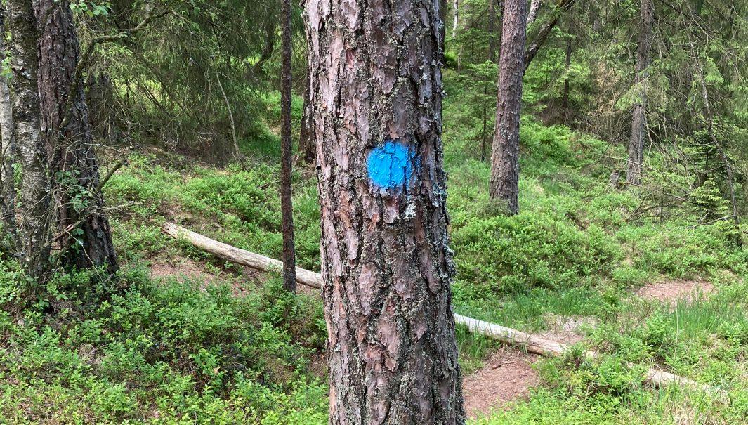 En blå prick på ett träd. Foto.