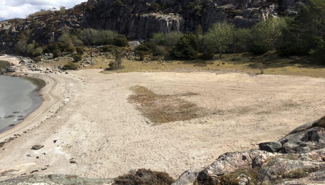 Strand där grävmaskin nyligen har grävt bort vresrosor. Foto.