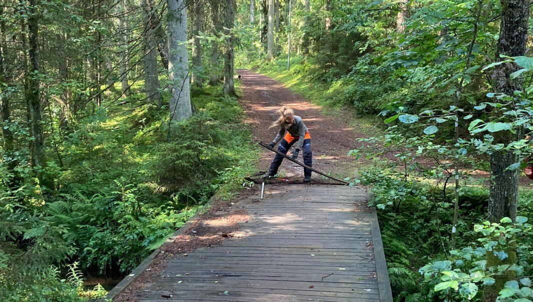 person står och drar upp bräda från en gammal bro. Foto.