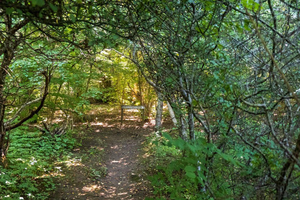 Skog som omsluter stigen, likt en tunnel, fram till en stigvägvisarskylt. Foto.