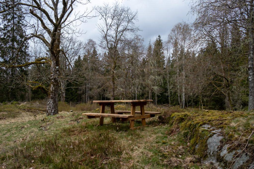 Ekbänk på öppen mark, skog längre bort. Foto.