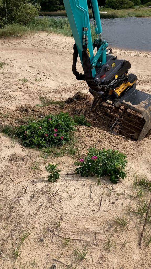 En grävskopa gräver uop vresrosor i sandig mark. Foto.
