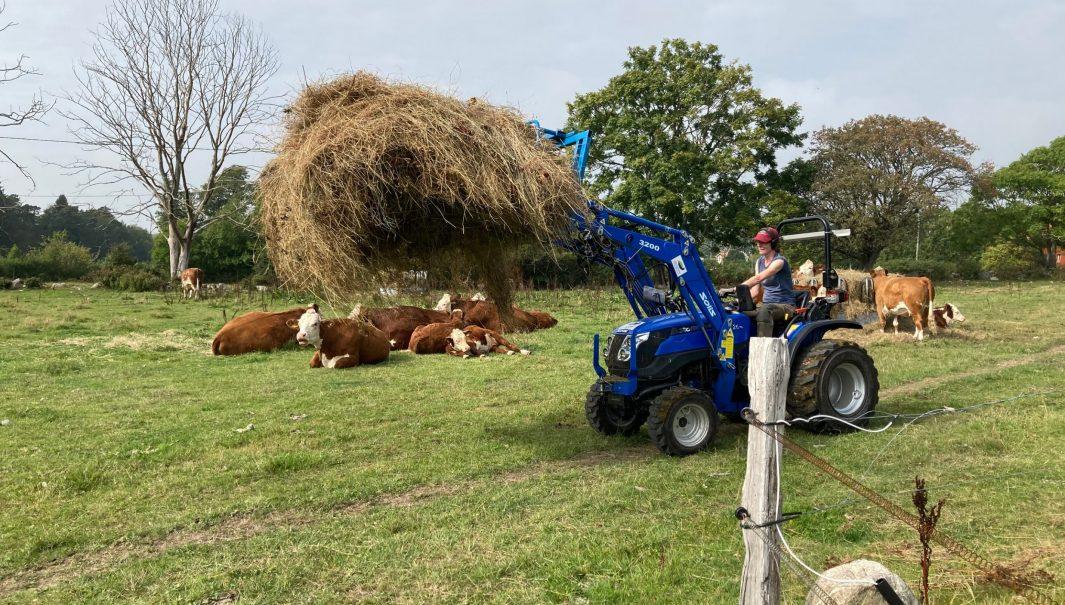 Person forslar bort ett stort lass med hö med en traktor. Foto.